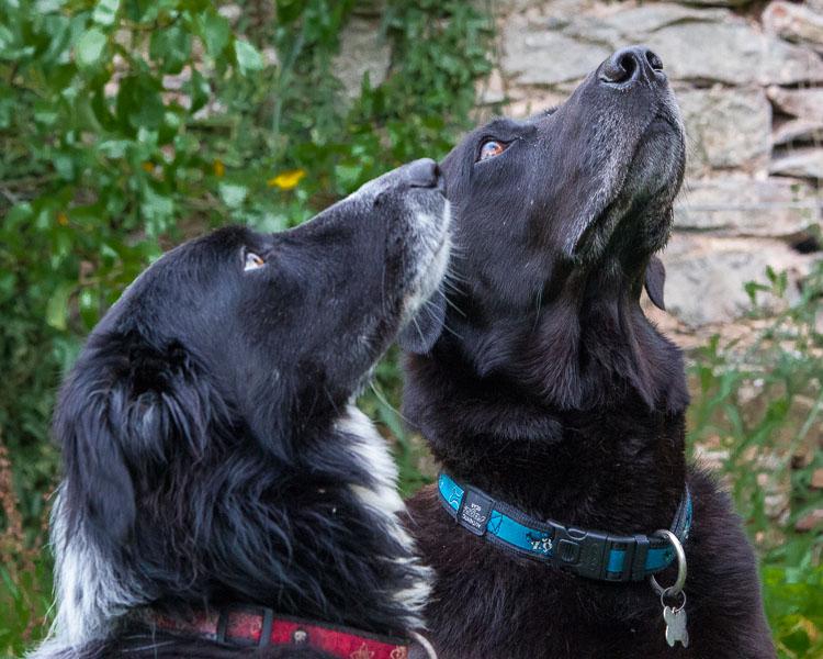 Dog Rescue Centres Lincs