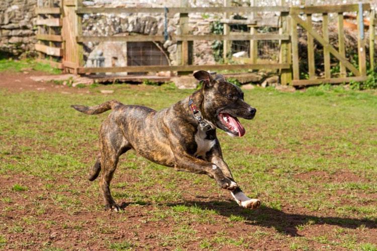 Dogs For Rehoming Devon Uk