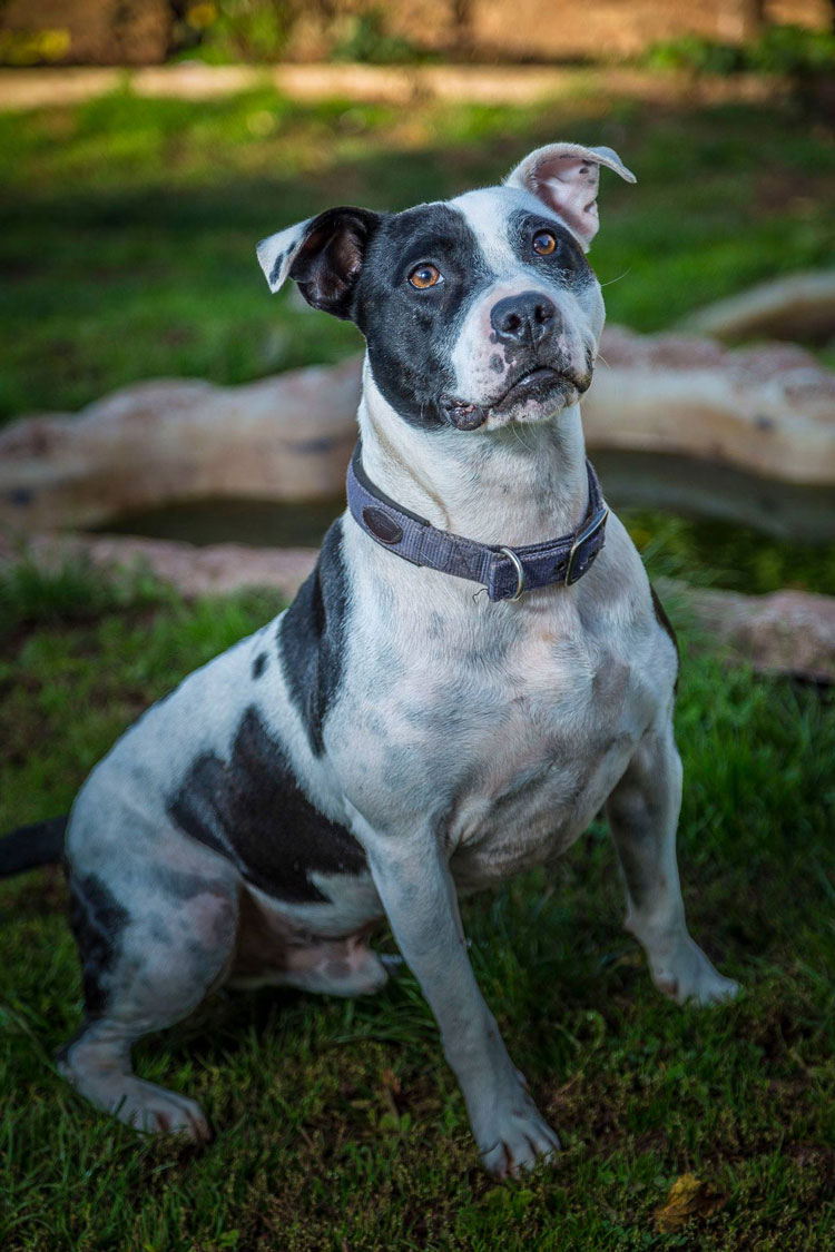 Devon Dog Rescue And Rehoming Rescue Dogs For Adoption