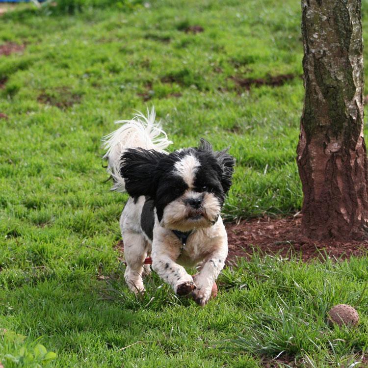 Rehoming Dogs Devon Uk