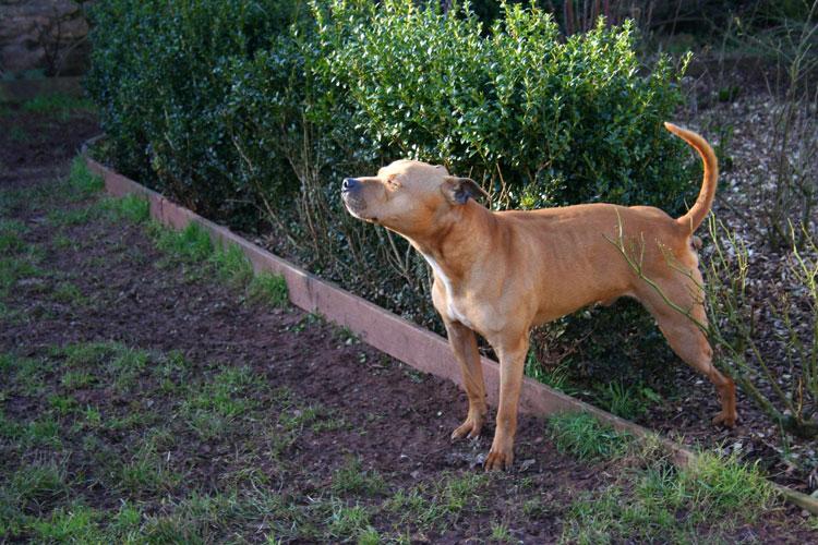 Dog Rescue Centres In Plymouth Devon