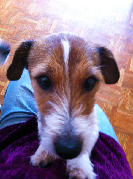 Rehome Friendly Dog