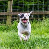 Devon Dog Rescue, rehoming dogs, devon, dog behaviour, Devon Dog Behaviour, Dog Rescue, dog rescue centre in Devon, dog adoption, rehabiliitation, rehome, rehoming, rescue dogs, dogs looking for a home